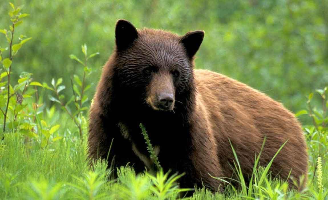 Whistler Bear Tours